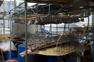 GARY STOKES HONG KONG SHARK FIN 2
